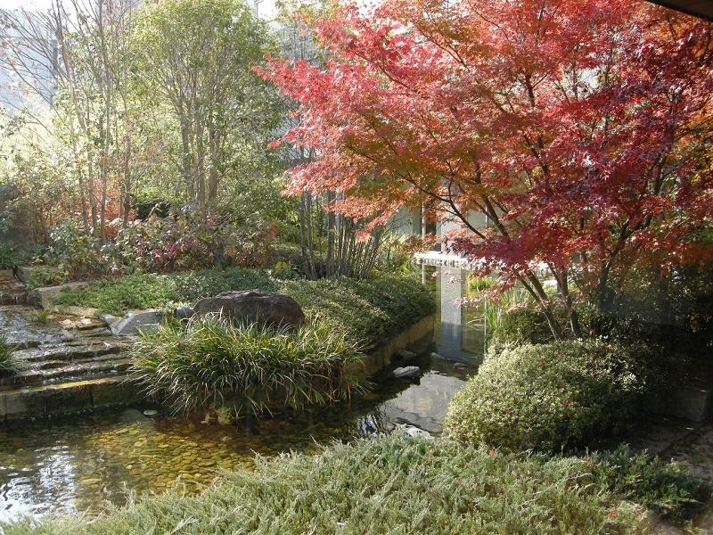 鮮やかに色づく冬の庭園