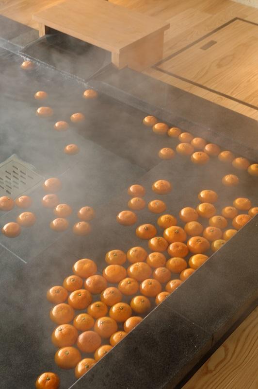 特産品の柑橘類もお愉しみいただけます(イメージ)