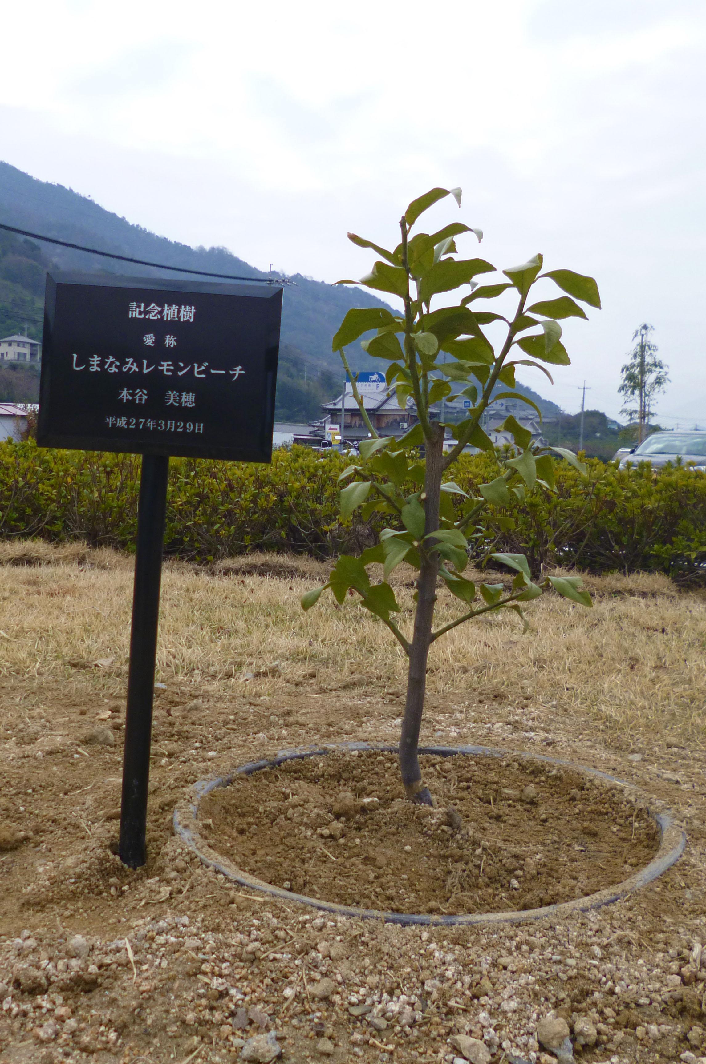 しまなみレモンビーチ記念植樹会・カヤック体験開催~シーズン到来!瀬戸田サンセットビーチ