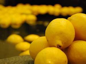 100個のフレッシュレモンが浮かぶ!瀬戸田町産レモンの湯~毎月26日は風呂の日!神勝寺温泉 昭和の湯