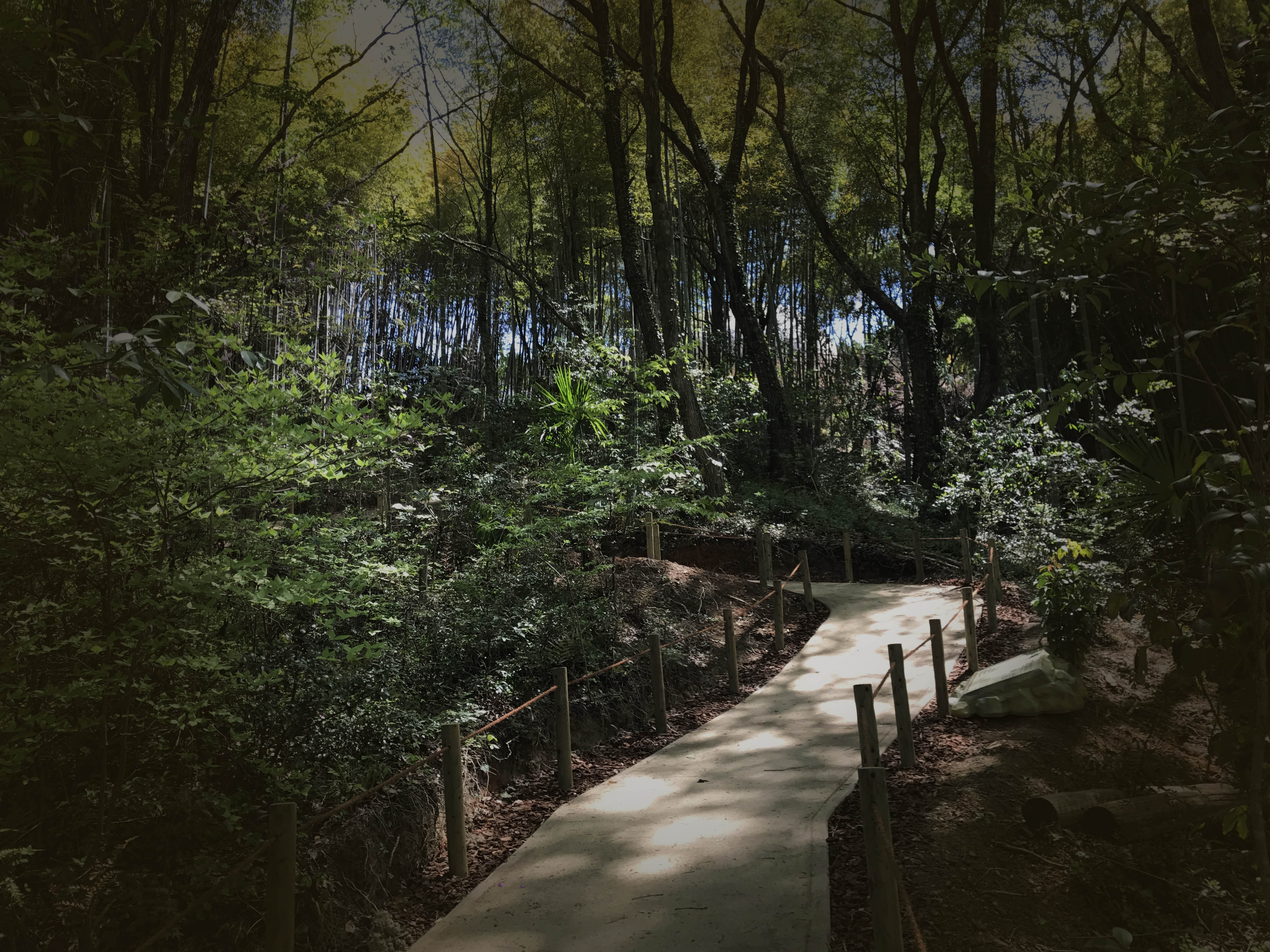 天然林の森の中に響く恐竜の声